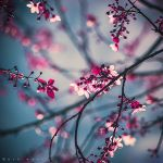 Daydream by Oer-Wout