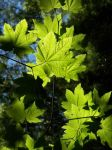 sunlite leaves by graphicMEdesign