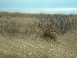 delaware bay 8 by Stock-Tenchigirl15