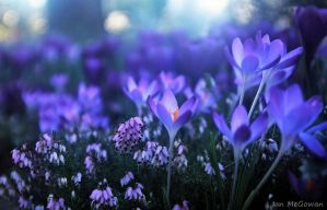 And all of a sudden it's Spring by 999999999a