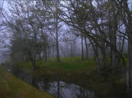 My Foggy Back Yard by SalemCat