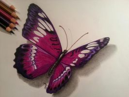 Butterfly by Tiguan247