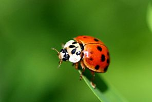 Lady bug on the edge. by sweatangel