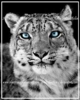Annapurna's Eyes by Chaotica-I