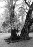 Black and White Trees by CheyennePhoto