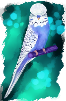 Budgie Portrait ( comission) by o0WhiteRaven0o