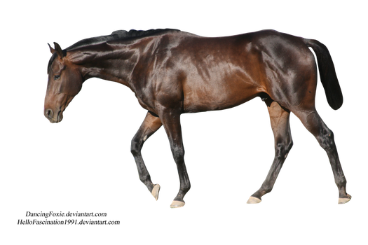 Pre-cut Thoroughbred by Hellofascination1991