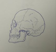 tiny skull study by matt136