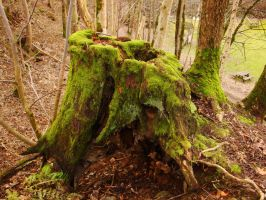 The Emerald Stump by Estruda
