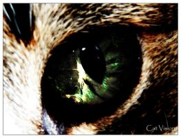 Cat Vision by destinationhell
