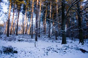 Snowy Woodland 48 by joannastar-stock