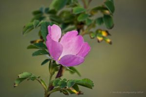 A Simple Beauty by Corvidae65