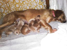 Puppies-3 Days Old by FlirtingWithInsanity