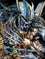 Wolverine VS Predator by logan968