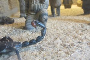 Sting of the Scorpion by marinevetdan