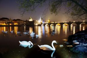 Ghost Swans by CaveCanem42