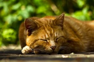 Sunny Afternoon Nap by akrPhotography