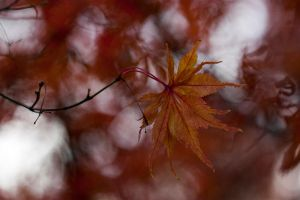 Autumn leaves 5 by TheEtherealSoul