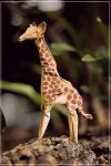 Origami Giraffe by FoldedWilderness