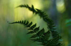 Ferns And The Mosquito by Nitrok