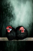 Chickens by Surrealart1702