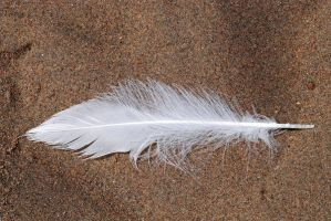 Feather01 by LucieG-Stock