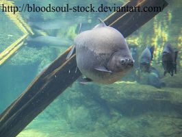 Fishes 02 by Bloodsoul-Stock