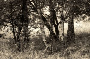Trees. by Phototubby