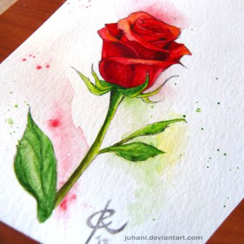 Pen and wash rose by Juhani
