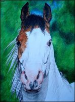 Drawing- American paint horse by Ennete