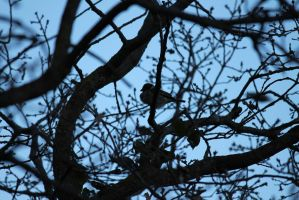 Bird 27/02/2012 by Andriel-Wii