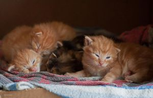 Kittens by Rayon2lune