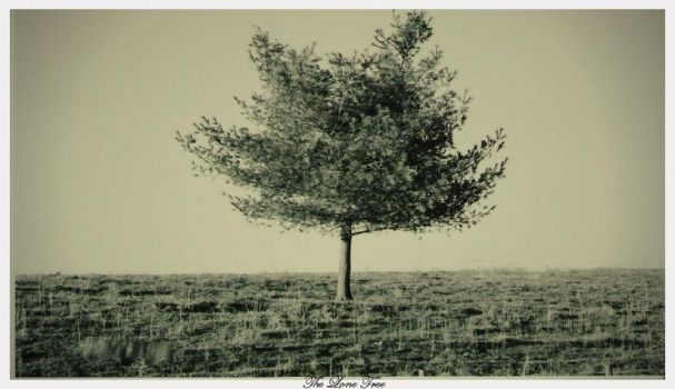 Lone Tree by JustImagineThis