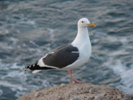 Hello Seagull by stephuhnoids