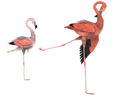 kick it out flamingo bird png by madetobeunique