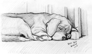 Sleeping Dog by KatiaST