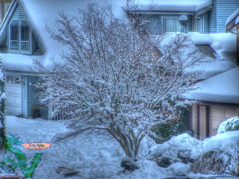 Snowy Tree HDR by shilpinator