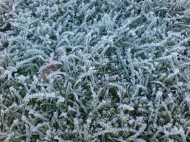 Snowy Grass by P8ntBal1551