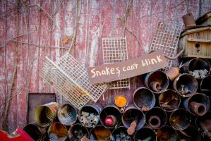 Snakes by FabulaPhoto