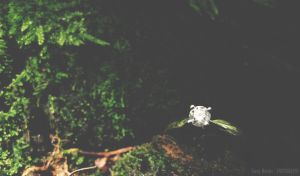 Engagement ring IV by lori80