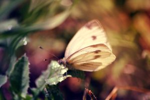 Butterfly9 by NRichey