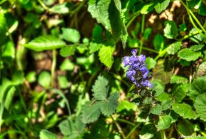 Purple and Green by Bodenlos