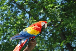 scarlet macaw 2 by meihua-stock