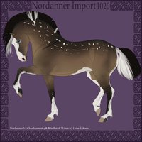 1012 Group Horse Import by Cloudrunner64