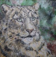 older snow leopard portrait by acrylicwildlife