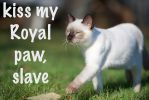 Royal Cat by LInconnu24