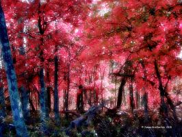 The Magic Forest by jim88bro