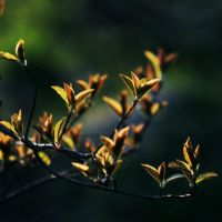 Spring breezes2 by untitled55