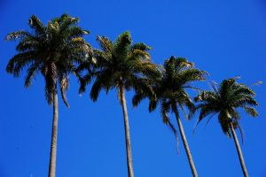 Palm Trees by Gapads
