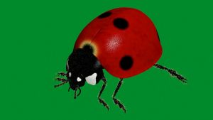 New Ladybird Model by smault23